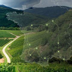 Assortiment Route des vins